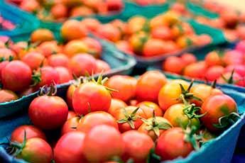 tomates almacen hortofruticola