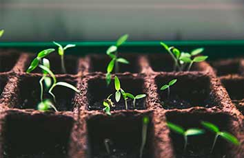 bandeja en semillero